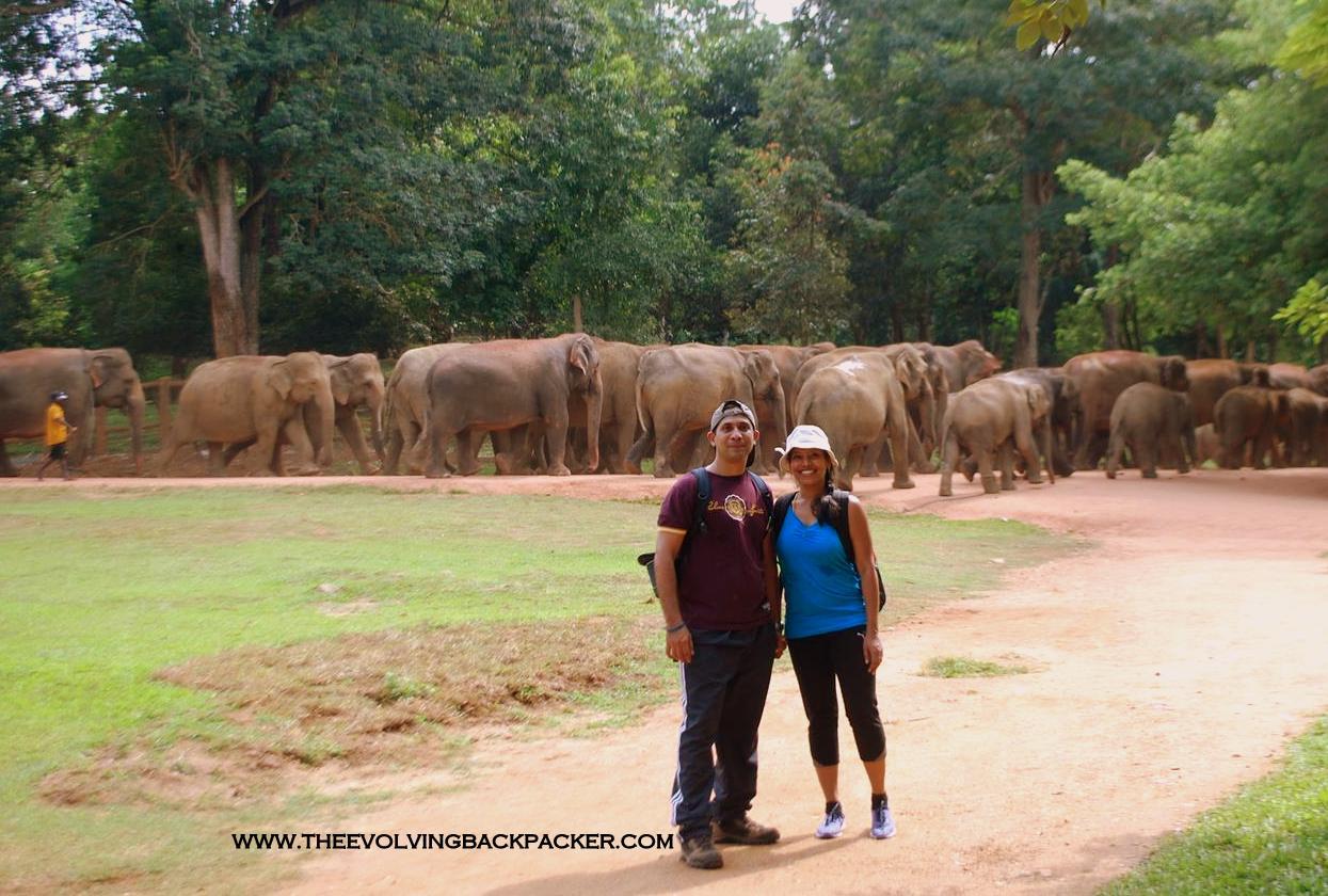 Sri Lanka / Kandy – Pinnewala Elephant Orphanage and Peridanaya Gardens