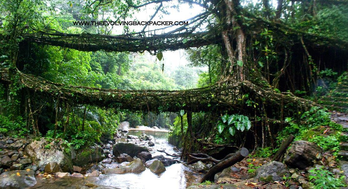 OMG – This Bridge is Alive!!. Living root Bridges – Nongriat, Meghalaya, INDIA