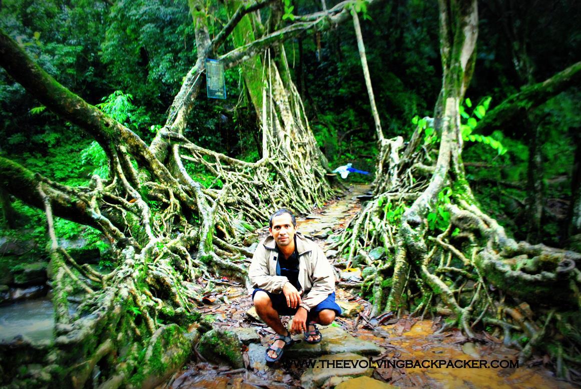 Nongriat Root bridges , Meghalaya, INDIA