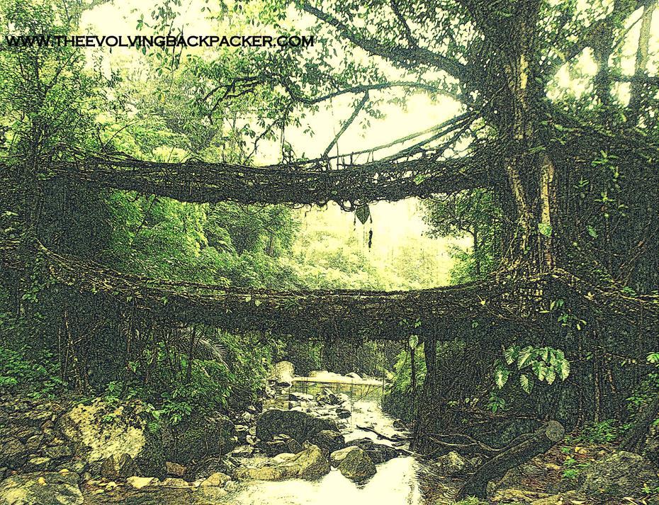 Nongriat Root bridges, Meghalaya, INDIA
