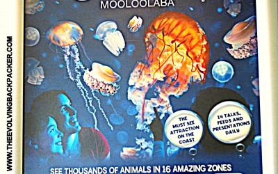 Underwater world – Mooloolaba, Sunshine Coast